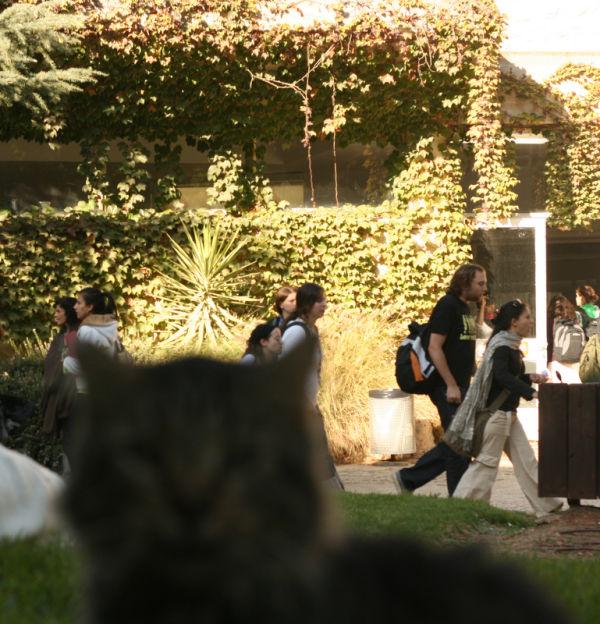 University cat