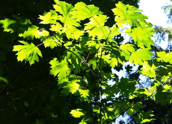 Leaves Stuart Island