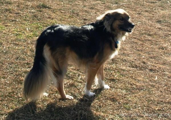 Annie Dog at Dog Run