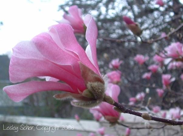 Spring Fling (II)
