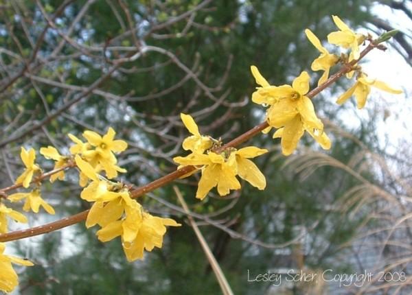 Spring Fling (IV)