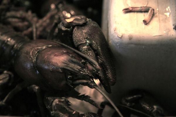 Crayfish at the Seattle Fish Market