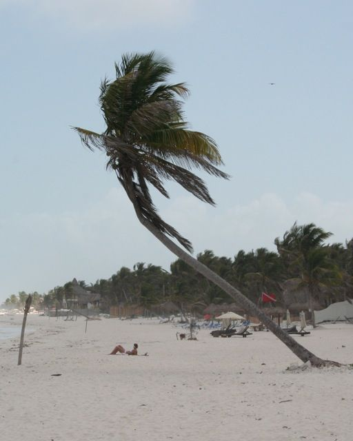 Palm Tree on Mexican Beach