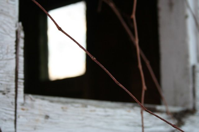Branch to Window to Window