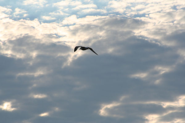 Seagull at he Beach