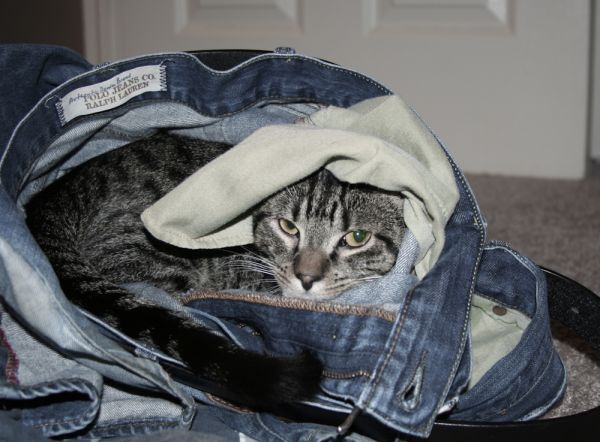 Scout In The Dirty Laundry