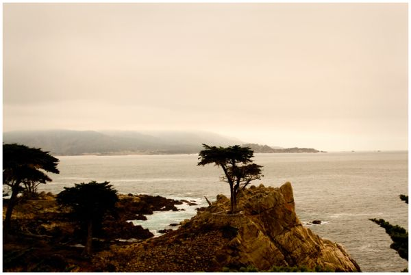 Lone Cyprus in Monterey, CA