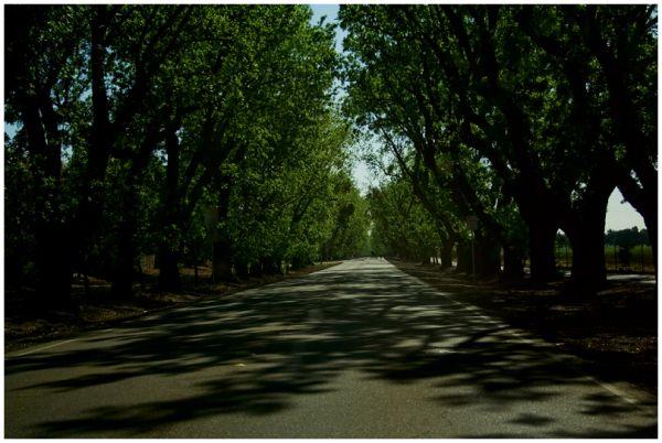 Road to Davis