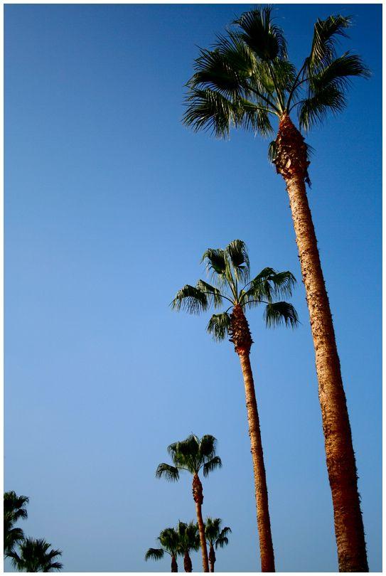 Palm Trees Outside Disneyland