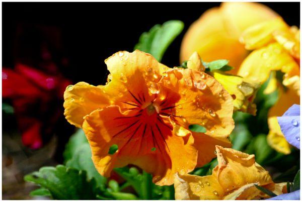 Flower after fresh sprinking