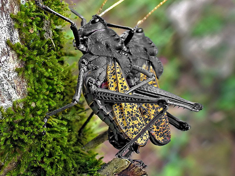 pixel podrido alberto guzman macro insectos