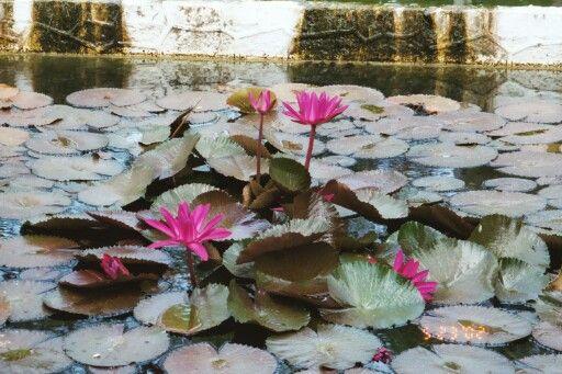A pond at UPRM