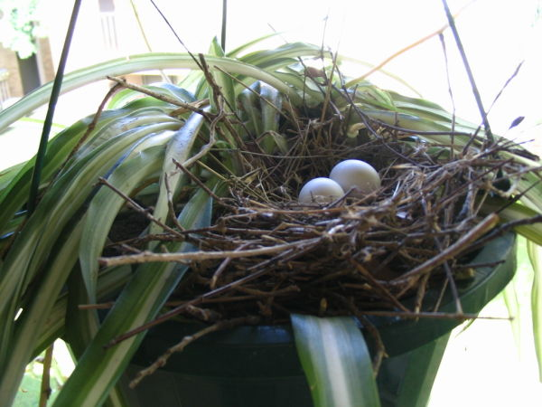 Can you guess who laid these eggs?