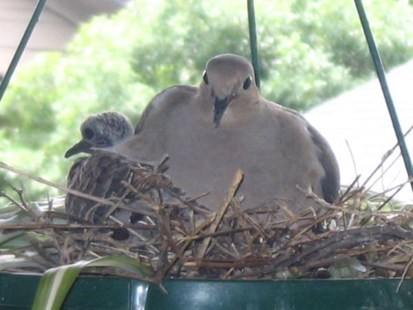 This nest is getting crowded!