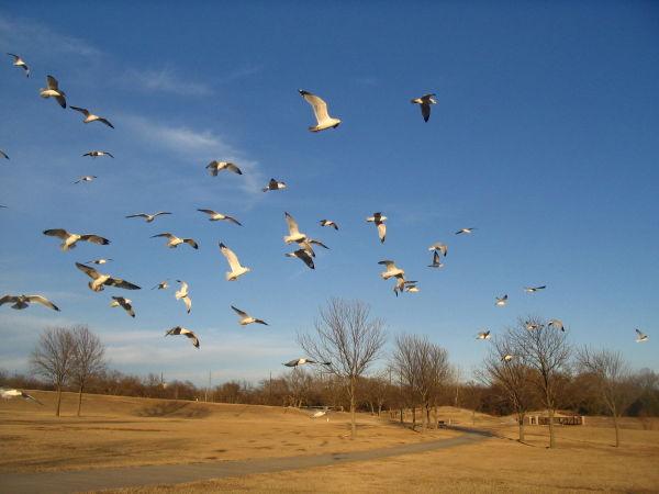 More seagulls