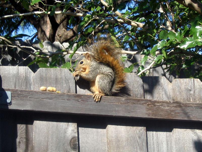 A squirrel visitor