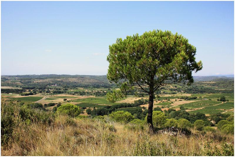murviel puech sud south france garrigue