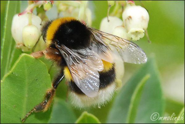 Bee, absorbing