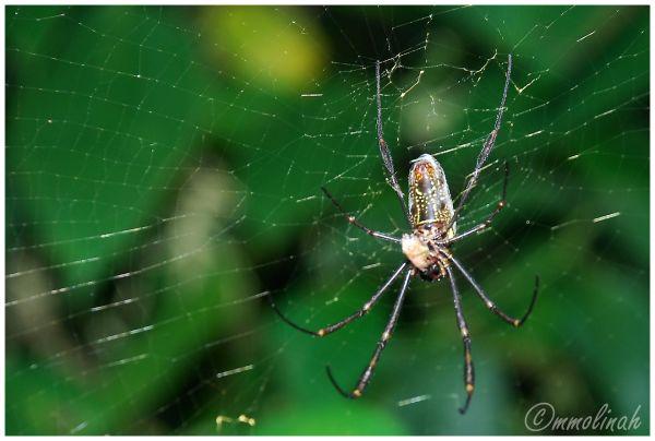 spiderweb telaraña
