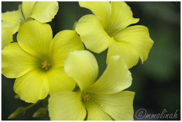 New flower in my garden