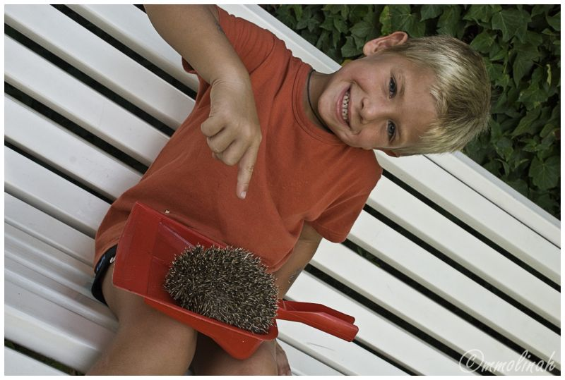 "The hedgehog's ""hunter"""