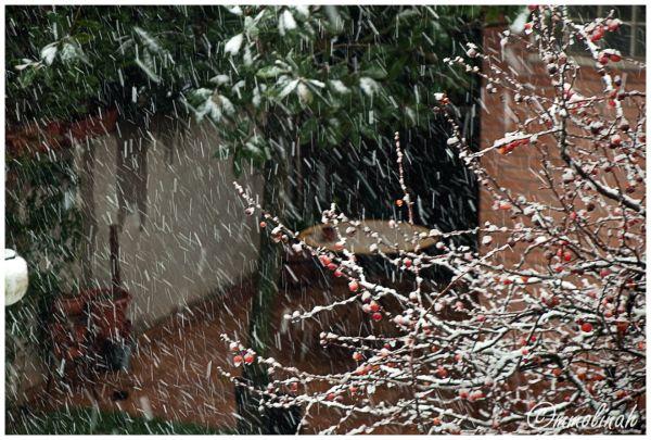 GIRONA'S SNOWFALL ( Biginning )