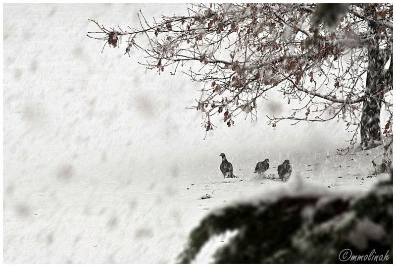 GIRONA'S SNOWFALL (Disorientate )