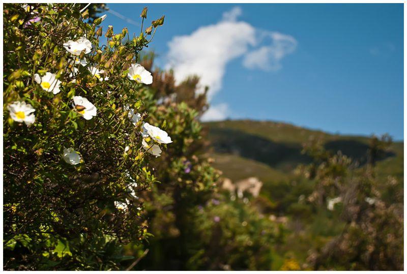 ALBERA NATURAL PARK OF GIRONA*