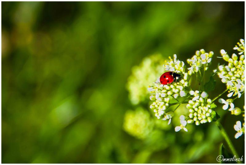 SPRINGTIME # 5 (Ladybird)