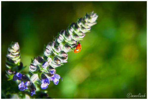 SPRINGTIME # 6 (Ladybird)