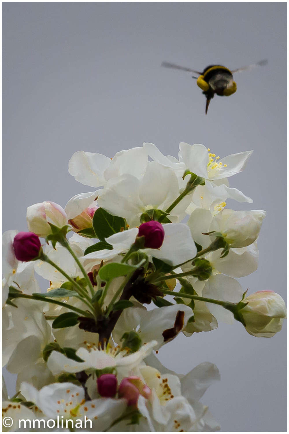 FLOWERS AND BEES FIVE
