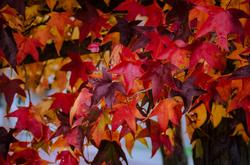 Colors Of Autumn #19