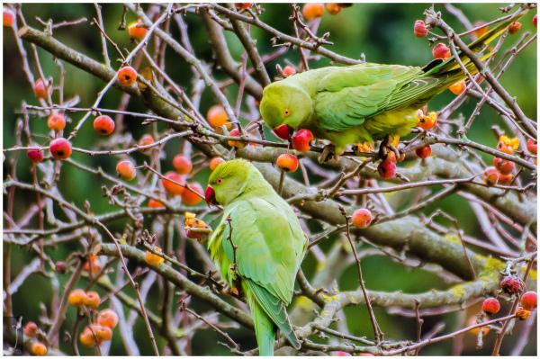 INVADING BIRDS & 2