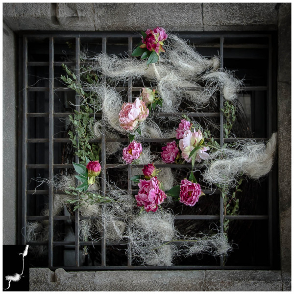 FLOWERS TIMES FROM GIRONA (window to the wind)