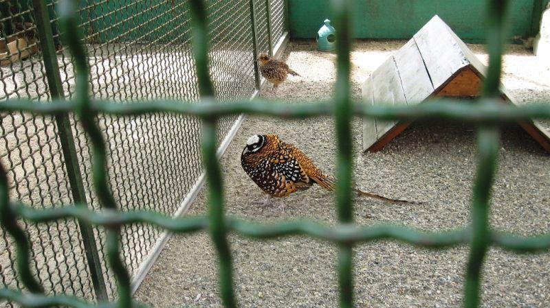 the imprisoned bird