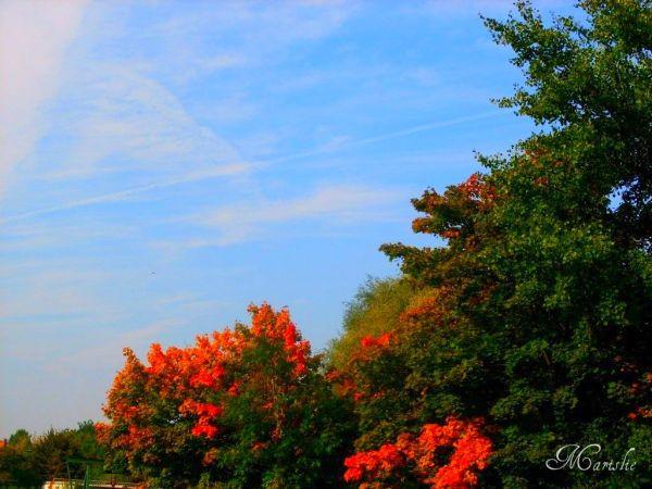 Autumn in Bürgerpark