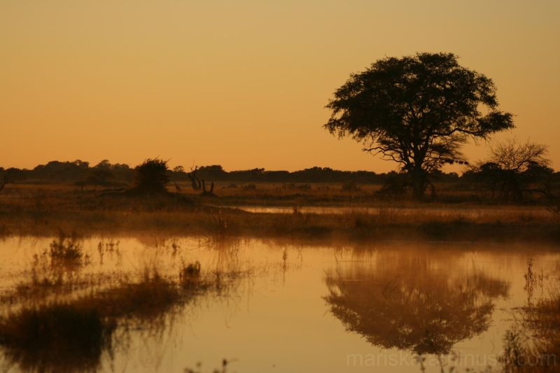 Moremi - Botswana