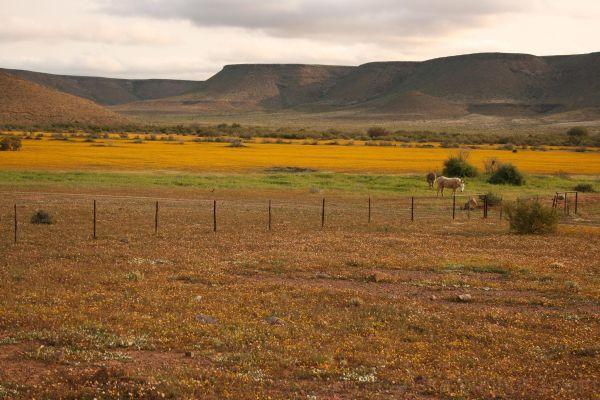 Namaqua Land