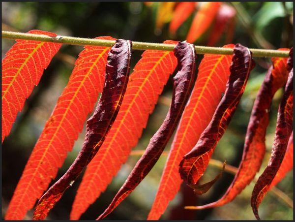 Natures Reds