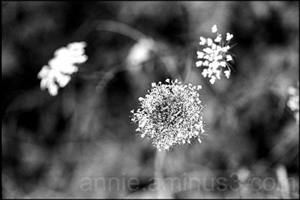 Dentelle de fleurs sauvages
