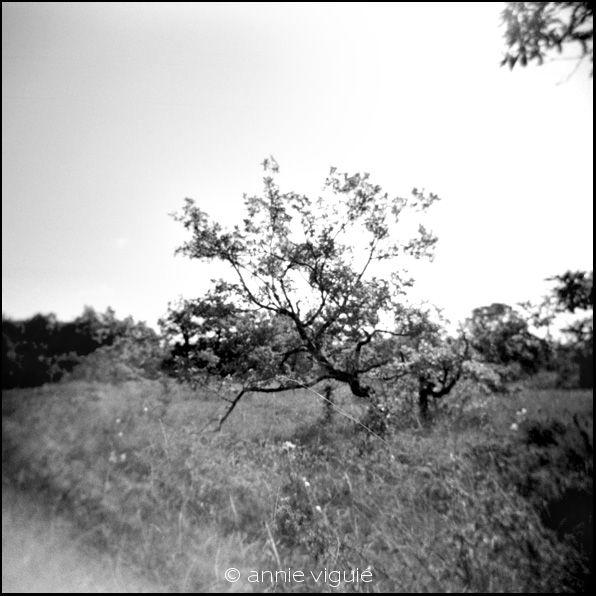 Chêne 2 - Quercy blanc - 2009