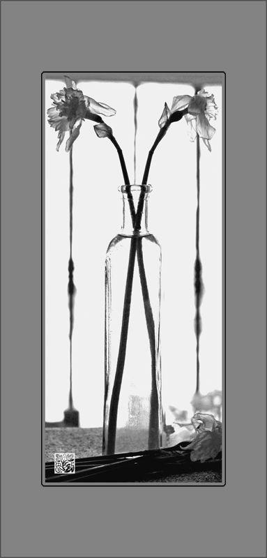 Vase aux jonquilles fanées...