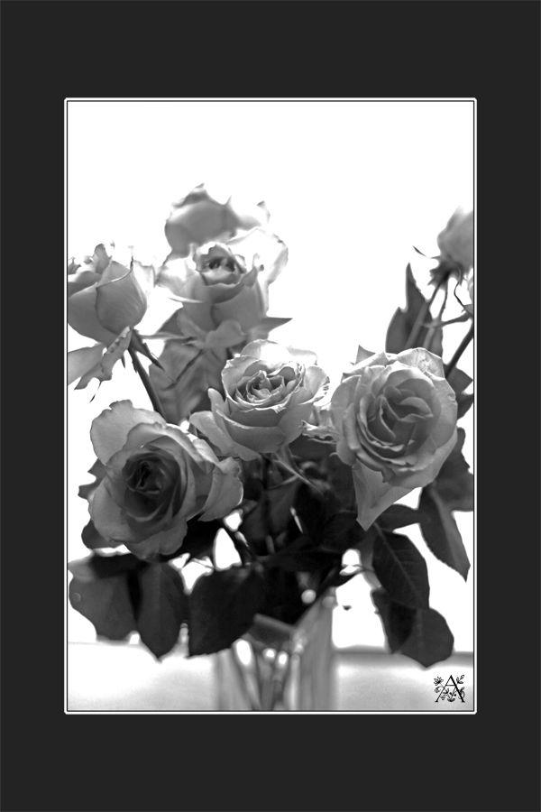 Roses en n&b
