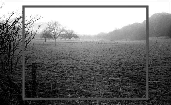 Petit matin dans la brume