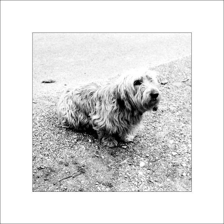 Le chien de Monsieur M.