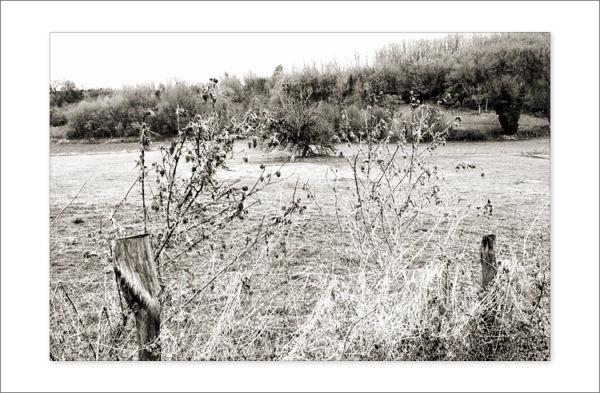 Petit arbre perdu au milieu...