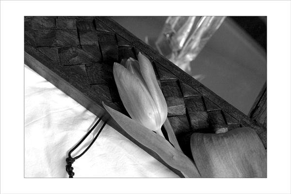 Composition à la tulipe