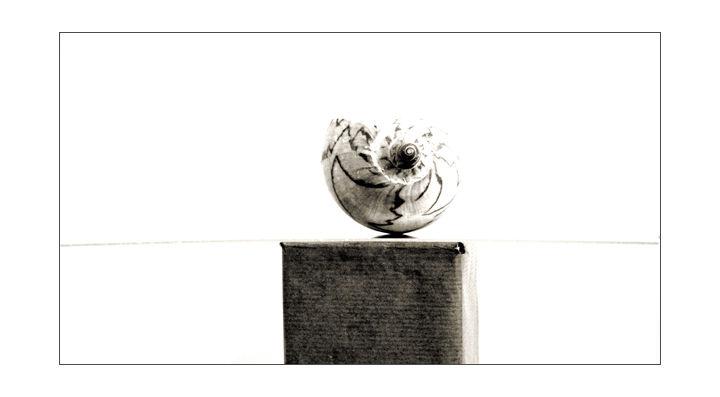 Coquillage - 1/2