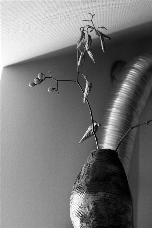 Branchage à baies rouges dans vase raku