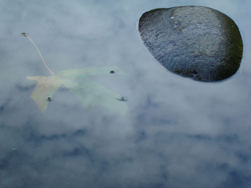 a leaf floats in the clouds